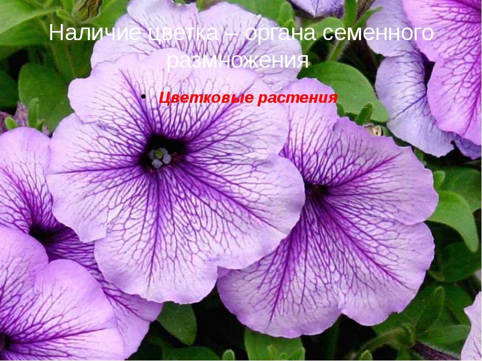 Наличие цветка – органа семенного размножения Цветковые растения