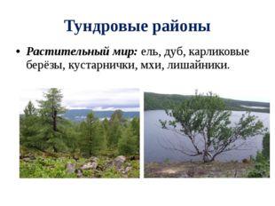 Тундровые районы Растительный мир: ель, дуб, карликовые берёзы, кустарнички,