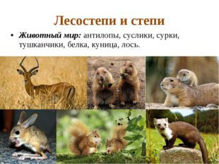 Лесостепи и степи Животный мир: антилопы, суслики, сурки, тушканчики, белка,