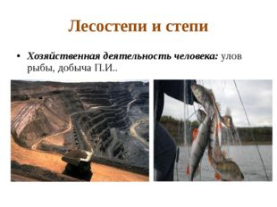 Лесостепи и степи Хозяйственная деятельность человека: улов рыбы, добыча П.И..