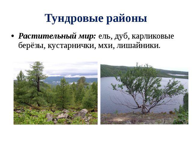 Тундровые районы Растительный мир: ель, дуб, карликовые берёзы, кустарнички,...
