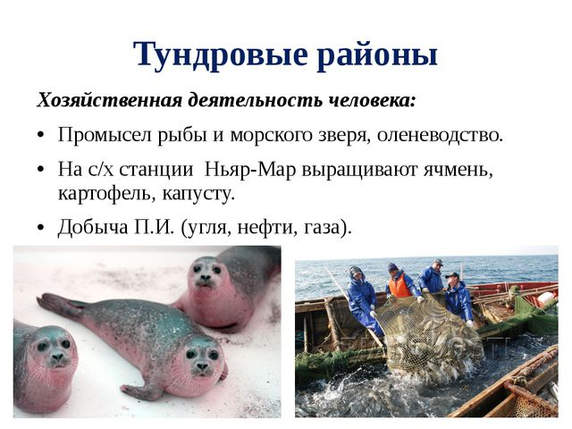 Тундровые районы Хозяйственная деятельность человека: Промысел рыбы и морског...