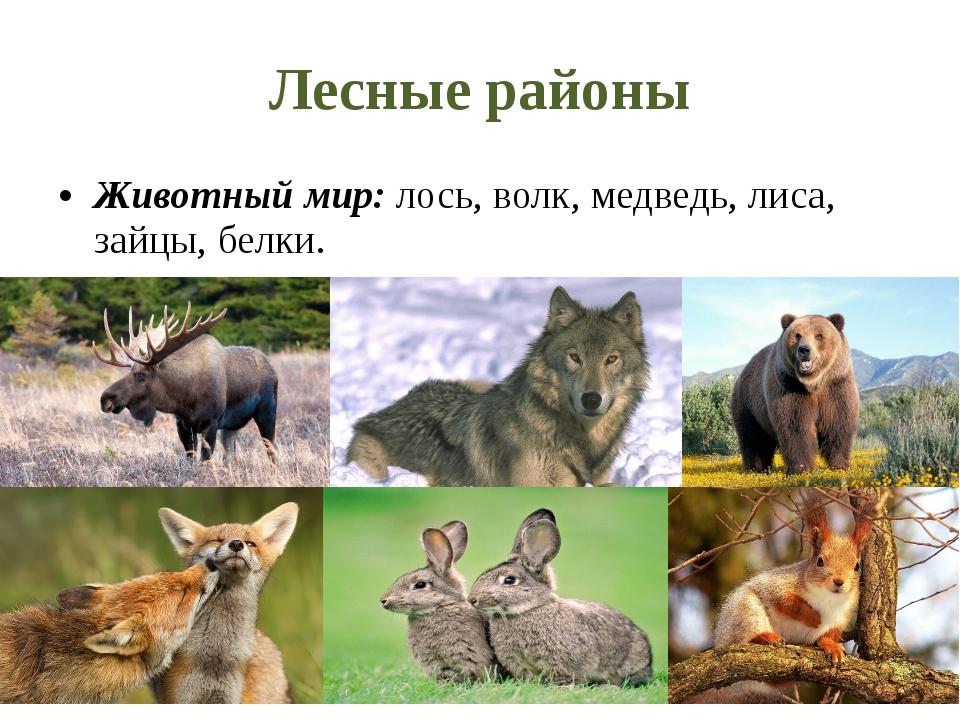 Лесные районы Животный мир: лось, волк, медведь, лиса, зайцы, белки.