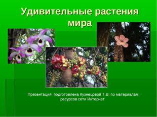 Удивительные растения мира Презентация подготовлена Кузнецовой Т.В. по матери