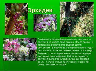 Орхидеи По форме и разнообразию окрасок цветков эти растения не имеют себе р