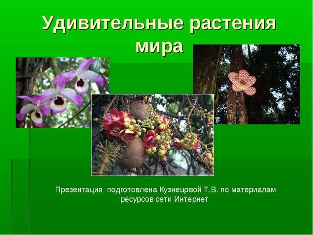 Удивительные растения мира Презентация подготовлена Кузнецовой Т.В. по матери...