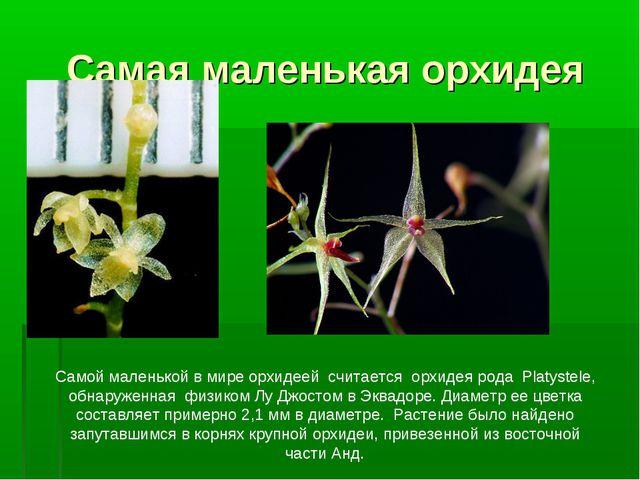 Самая маленькая орхидея Самой маленькой в мире орхидеей считается орхидея род...