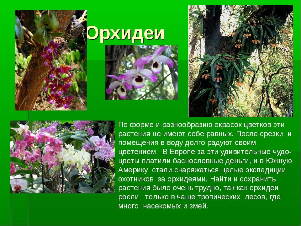 Орхидеи По форме и разнообразию окрасок цветков эти растения не имеют себе р...