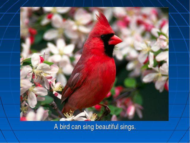 A bird can sing beautiful sings.