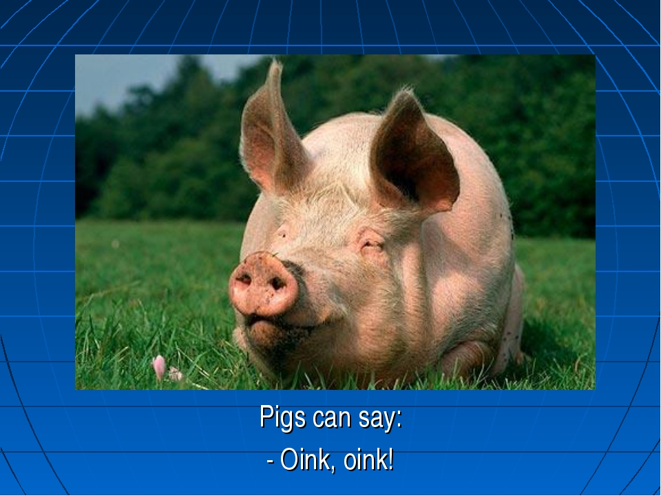 Pigs can say: - Oink, oink!