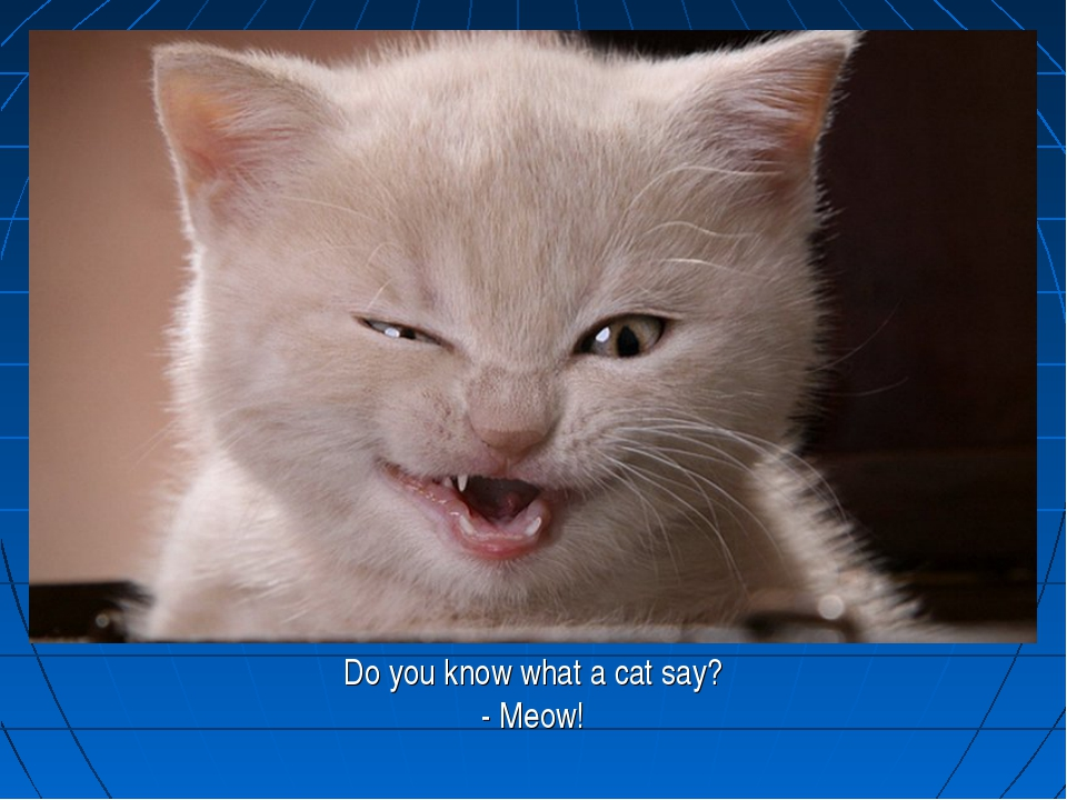 Do you know what a cat say? - Meow!