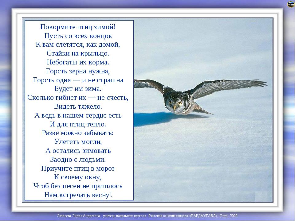 Цитаты и стихи о птицах