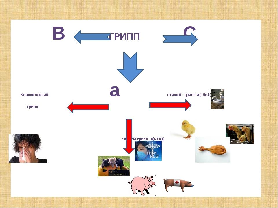 В ГРИПП С Классический а птичий грипп а(н5n1) грипп свиной грипп а(н1n1)