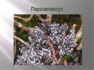 Паразитаксус