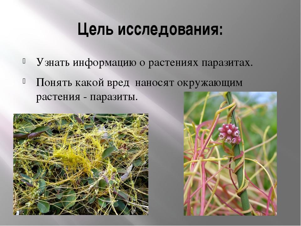 Цель исследования: Узнать информацию о растениях паразитах. Понять какой вред...