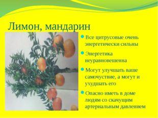 Лимон, мандарин Все цитрусовые очень энергетически сильны Энергетика неуравно
