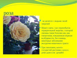роза не делится с людьми своей энергией Может снять с вас переизбыток отрицат