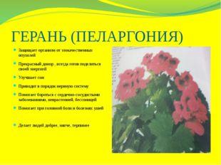 ГЕРАНЬ (ПЕЛАРГОНИЯ) Защищает организм от злокачественных опухолей Прекрасный