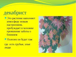 декабрист Это растение наполняет атмосферу новым настроением, пробуждает в че