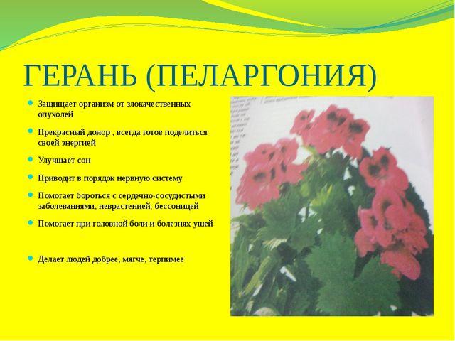ГЕРАНЬ (ПЕЛАРГОНИЯ) Защищает организм от злокачественных опухолей Прекрасный...