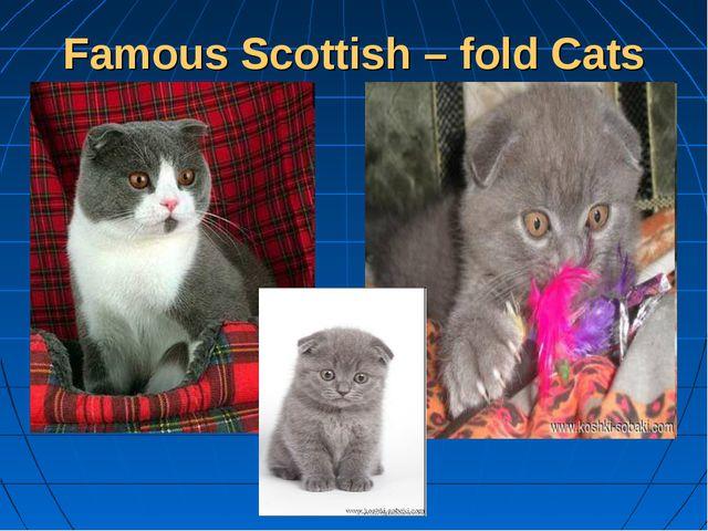 Famous Scottish – fold Cats