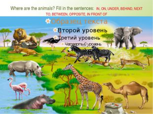 Where are the animals? Fill in the sentences: IN, ON, UNDER, BEHIND, NEXT TO,