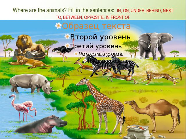 Where are the animals? Fill in the sentences: IN, ON, UNDER, BEHIND, NEXT TO,...