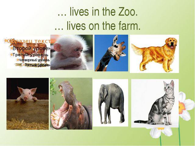 … lives in the Zoo. … lives on the farm.