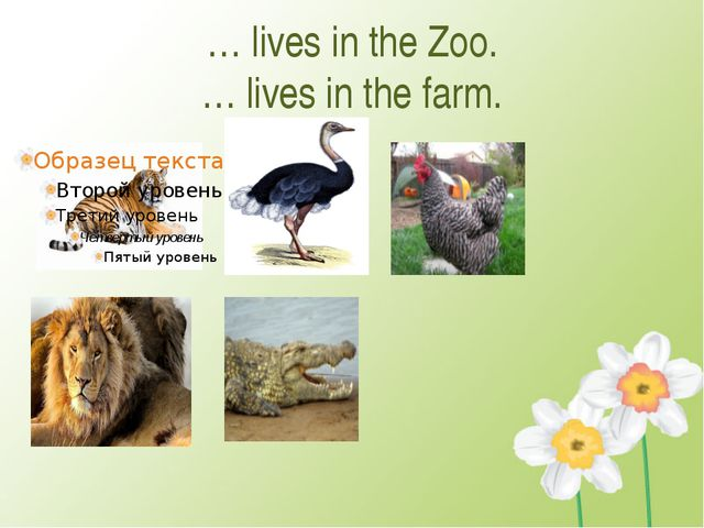 … lives in the Zoo. … lives in the farm.