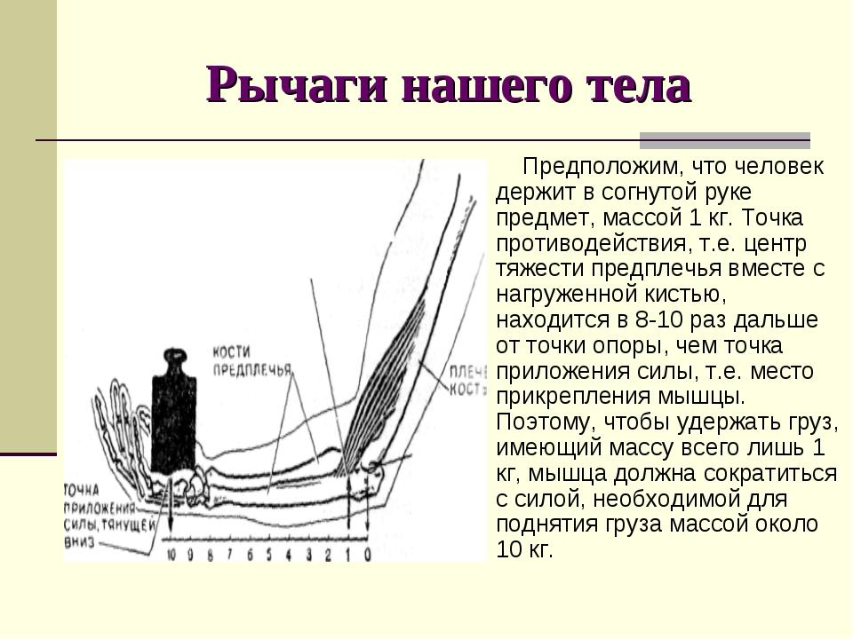 Рычаги нашего тела Предположим, что человек держит в согнутой руке предмет, м...