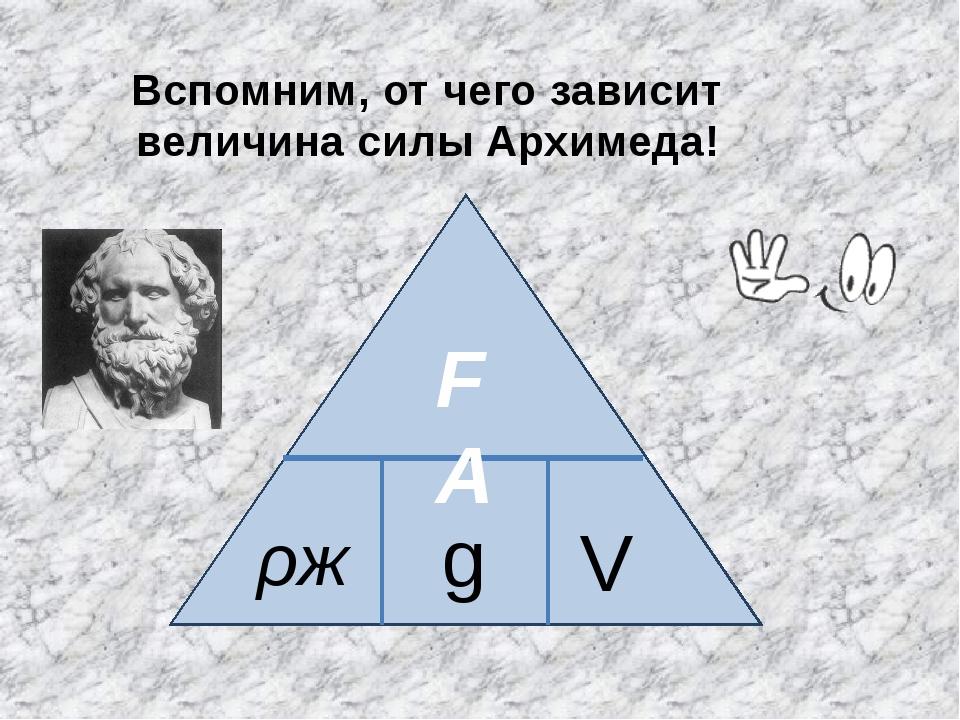 Вспомним, от чего зависит величина силы Архимеда! FA ρж g V