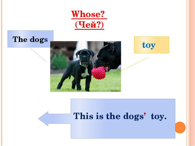 Whose? (Чей?) toy The dogs This is the dogs' toy.