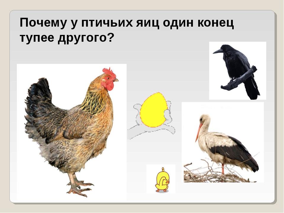 Почему у птичьих яиц один конец тупее другого?