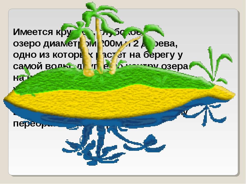 Имеется круглое, глубокое озеро диаметром 200м и 2 дерева, одно из которых ра...
