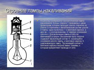 Строение лампы накаливания На рисунке изображена газонаполненная лампа накали