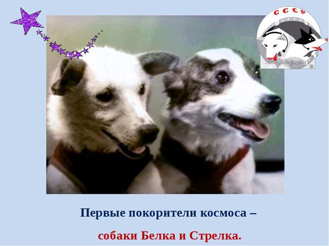 Первые покорители космоса – собаки Белка и Стрелка.