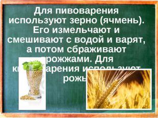 Для пивоварения используют зерно (ячмень). Его измельчают и смешивают с водой