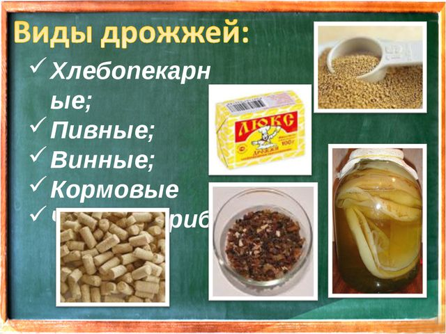 Хлебопекарные; Пивные; Винные; Кормовые Чайный гриб;