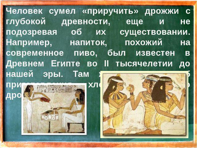 Человек сумел «приручить» дрожжи с глубокой древности, еще и не подозревая об...