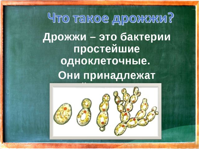 Дрожжи – это бактерии простейшие одноклеточные. Они принадлежат семейству гр...