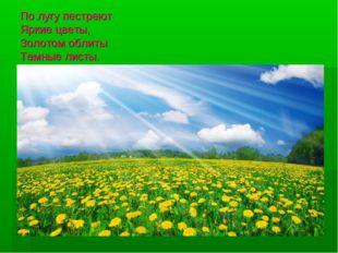 По лугу пестреют Яркие цветы, Золотом облиты Темные листы. 112468_original.jpg