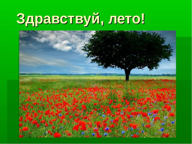 Здравствуй, лето! porhaushie-babochki-960x540.jpg