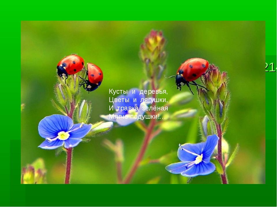 413214413214__ladybirds_p.jpg__la413214__ladybirds_p.jpgdybirds_p.jpg Кусты и...