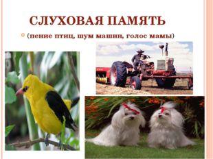 СЛУХОВАЯ ПАМЯТЬ (пение птиц, шум машин, голос мамы)