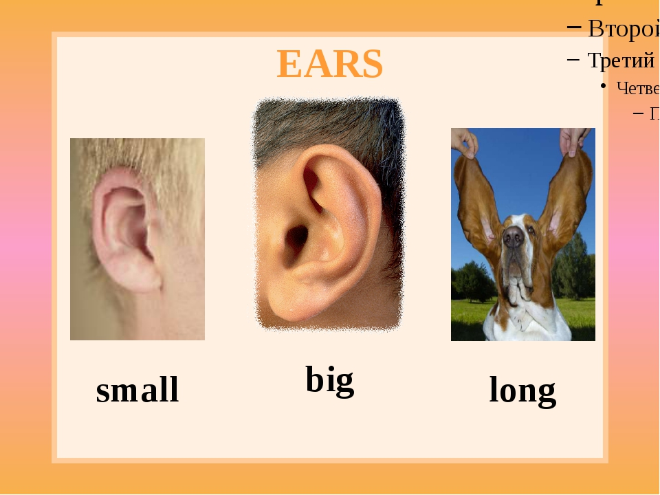 EARS small big long