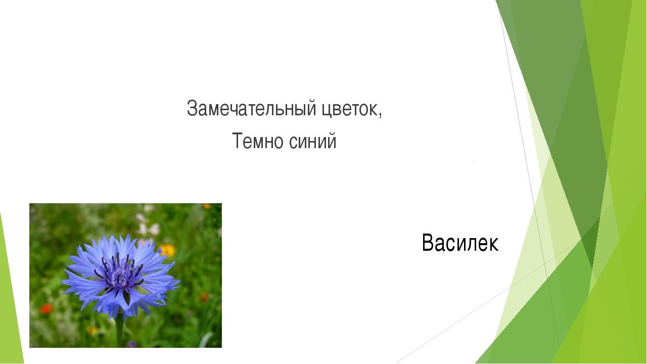 Замечательный цветок, Темно синий Василек