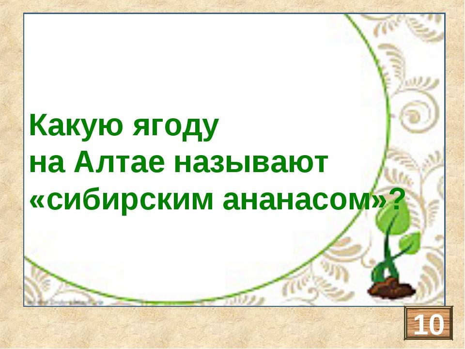 ОБЛЕПИХА Какую ягоду на Алтае называют «сибирским ананасом»? 10