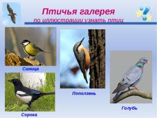 Птичья галерея по иллюстрации узнать птиц Синица Сорока Поползень Голубь