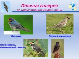 Птичья галерея по иллюстрации узнать птиц Ласточка Полевой жаворонок Пегий ск