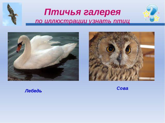 Птичья галерея по иллюстрации узнать птиц Лебедь Сова